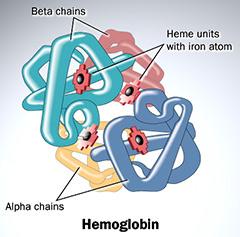 hemoglobin | grade 12u chemistry systems and equilibrium
